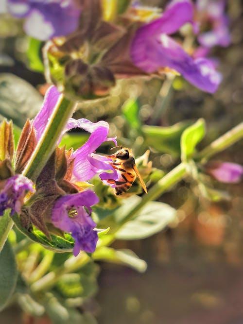 Free stock photo of beautiful flower, beautiful nature, bee
