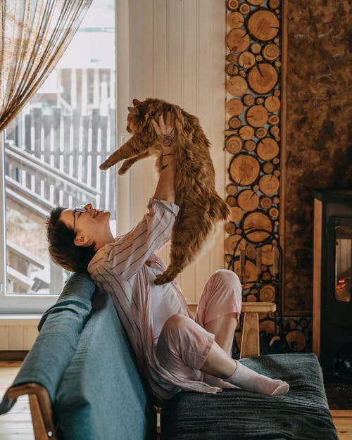 Side view of cheerful young female with short dark hair in casual clothes holding and playing with cute fluffy cat sitting on sofa in cozy apartment