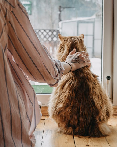 Back view of crop unrecognizable tattooed female owner in casual clothes caressing obedient fluffy cat sitting on floor and looking through window