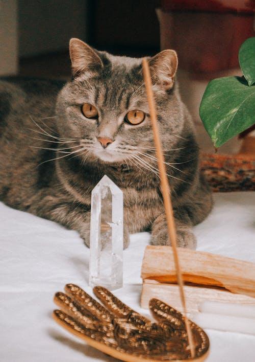 Δωρεάν στοκ φωτογραφιών με Γάτα, γατάκι, γλυκούλι