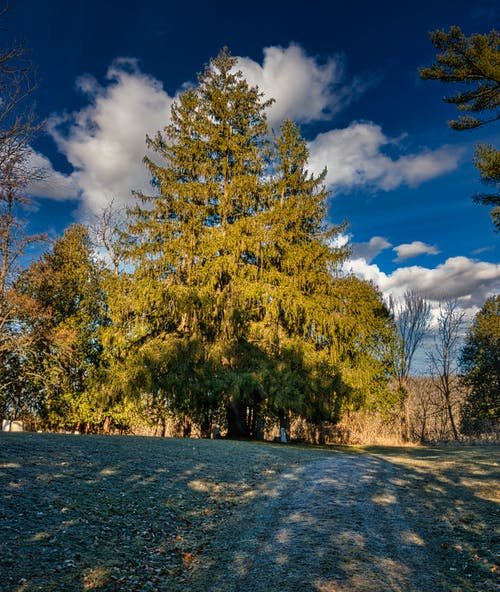 Green and Yellow Trees Under Blue Sky