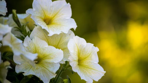Безкоштовне стокове фото на тему «великий план, квіти, квітка, Квітковий»