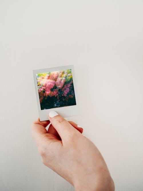 Fotos de stock gratuitas de adentro, adulto, amor