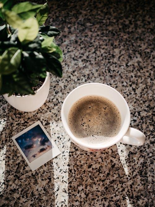 Fotos de stock gratuitas de alubia, amanecer, atractivo
