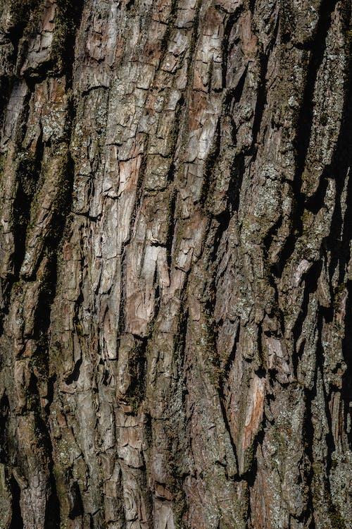 คลังภาพถ่ายฟรี ของ ขรุขระ, ต้นไม้, ยิงแนวตั้ง