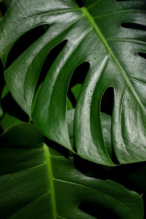 Kostenloses Stock Foto zu biologie, blatt, botanisch