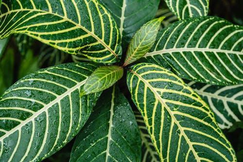 Darmowe zdjęcie z galerii z flora, krople, liście