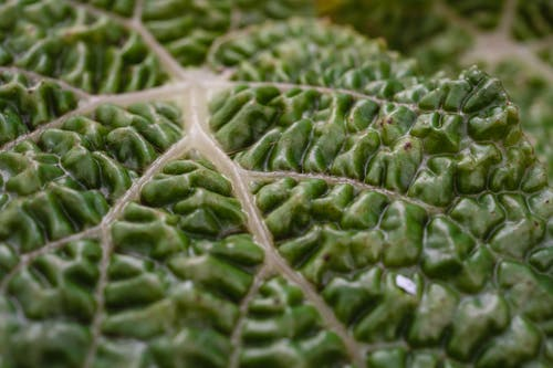 A Macro Shot of a Green Leaf