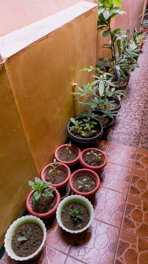 Photos gratuites de arrondir, botanique, casseroles