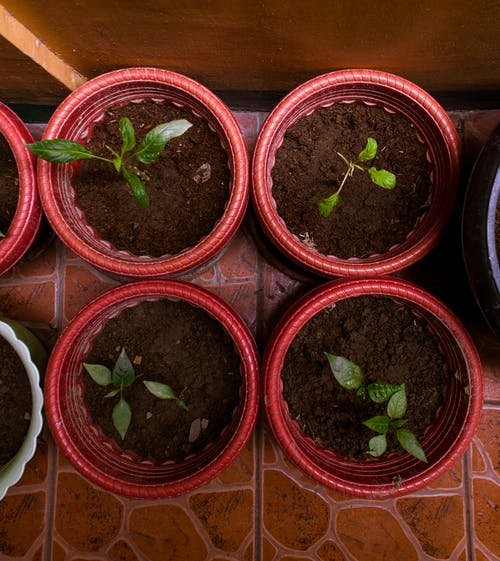 Top View Photo of Potted Plants