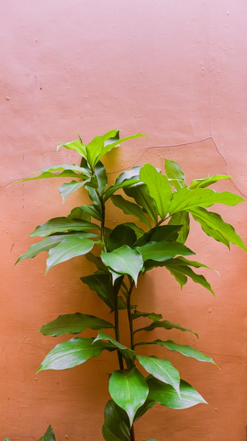 Close Up Photo of Green Plant Beside Brown Wall