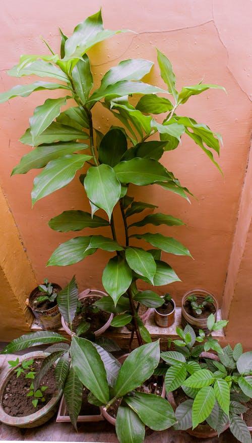 Photos gratuites de arrondir, botanique, branche