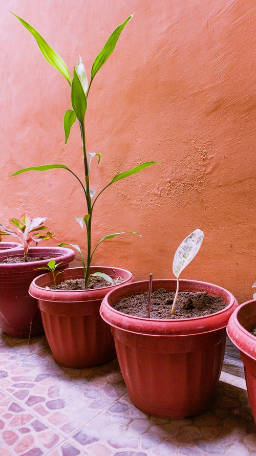 Close Up Photo of Green Potted Plants