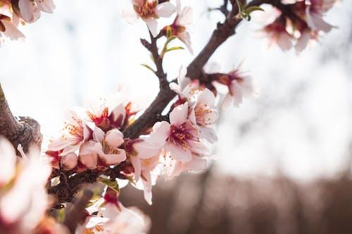 Gratis lagerfoto af blade, blomster, fjeder