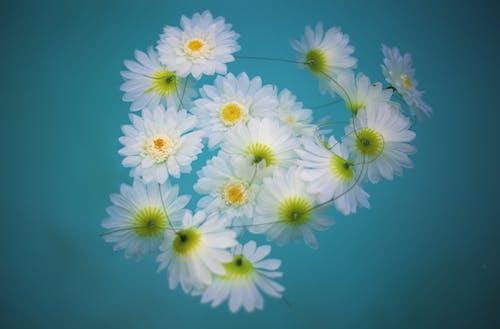 Free stock photo of floating, flowers, ocean