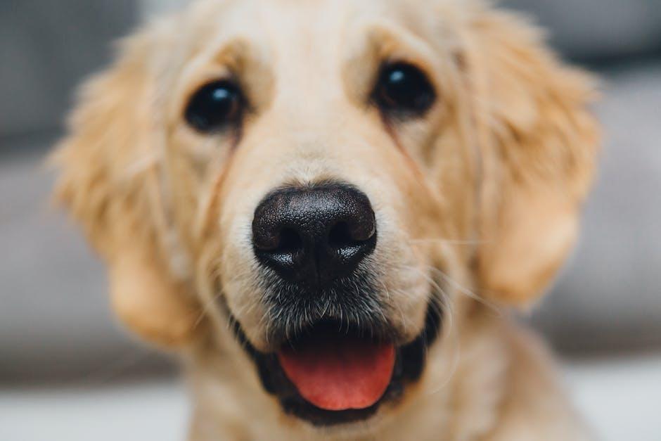 Los perros están motivados genéticamente para el contacto con humanos