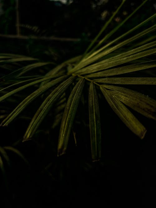 Close-Up Photo of Green Palm Leaves