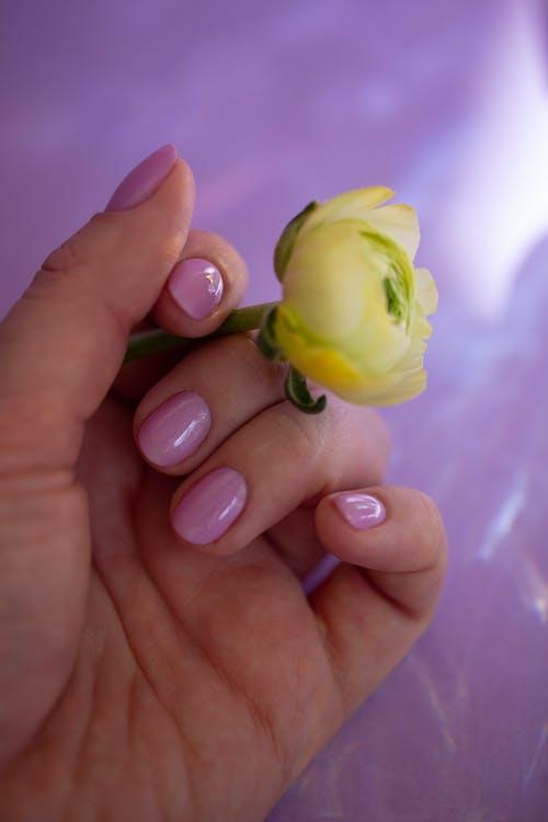 Foto profissional grátis de amarelo, amor, atraente