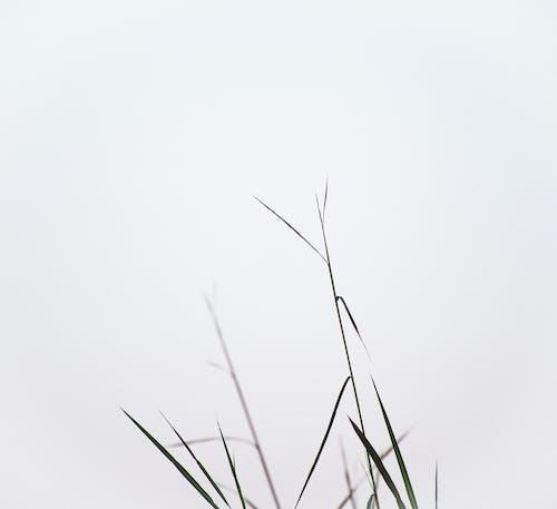 Photos gratuites de abstrait, art, aube