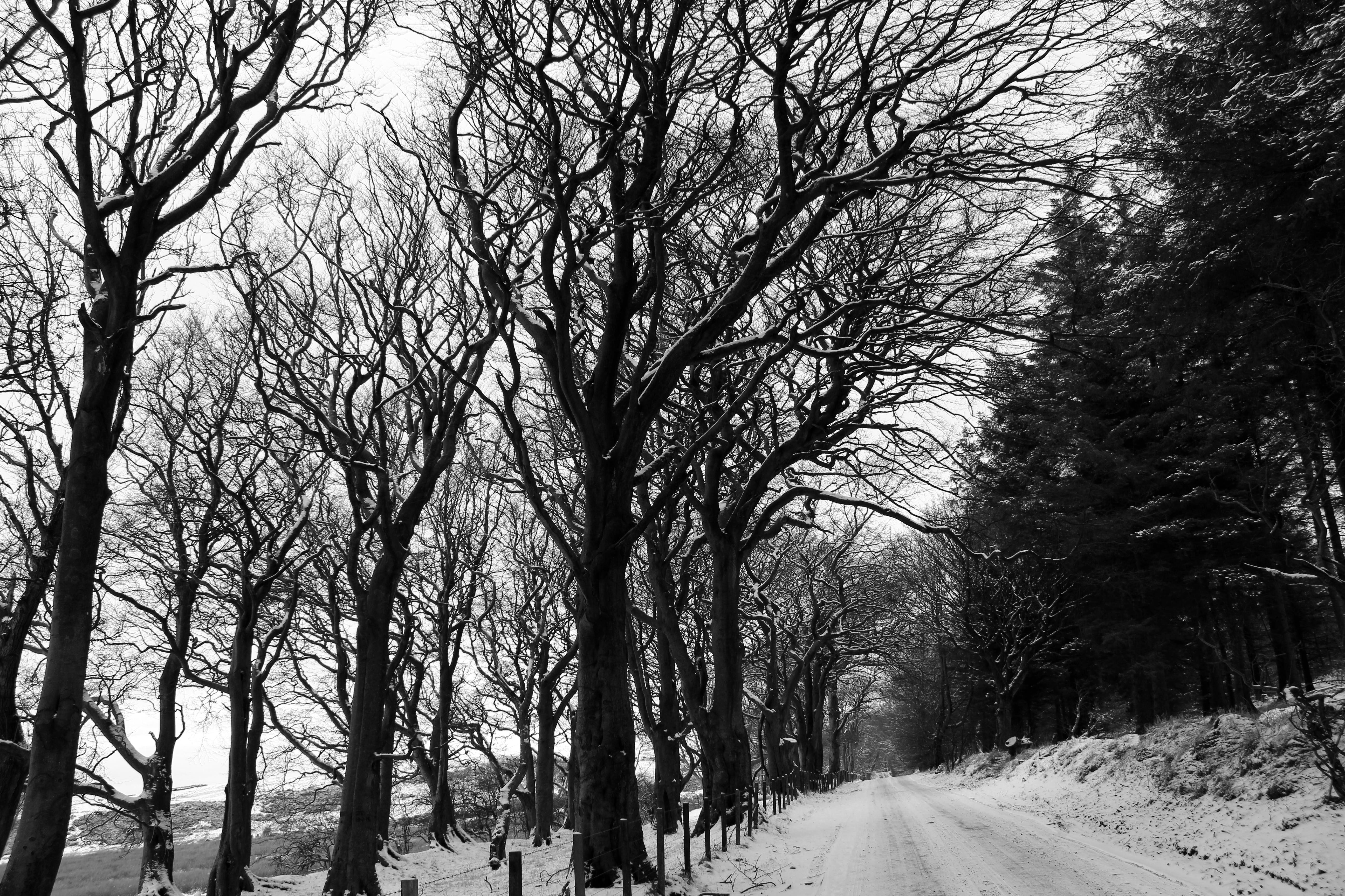 Grayscale Photography of Snow-covered Field and Bare Trees