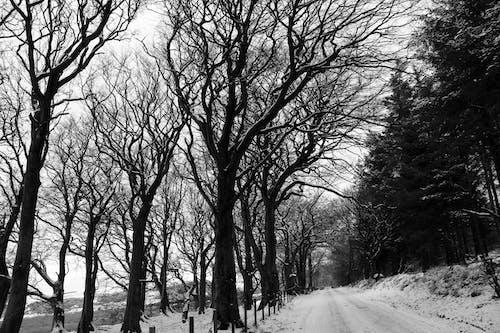 Фотография заснеженного поля и голых деревьев в оттенках серого