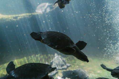Δωρεάν στοκ φωτογραφιών με ερπετό, ζώο, υποβρύχιος