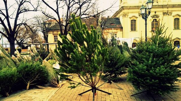 Free stock photo of tree, urban, hungary, Budapest