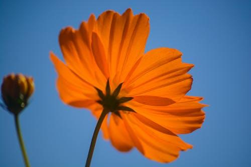Close Up Photo of Beautiful Orange Flower