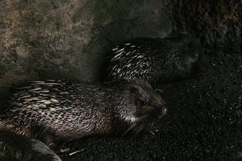 Close-Up Shot of Hedgehogs
