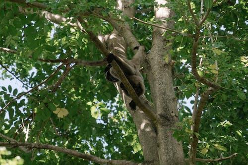 ağaç, bali, düşük açılı atış içeren Ücretsiz stok fotoğraf