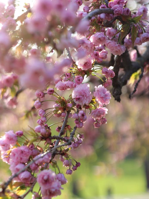 꽃, 꽃 사진, 꽃봉오리의 무료 스톡 사진