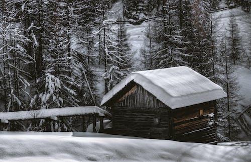 Gratis arkivbilde med årstid, fjell, forkjølelse, frosset