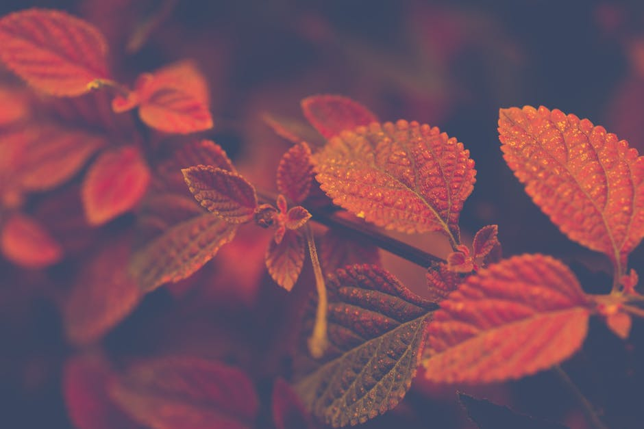 Shallow focus photo of red and brown leaves