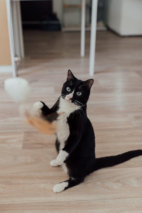 a Bicolor Cat Sitting on Floor