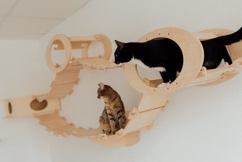 Cats Standing on the Wooden Platform Mounted on the Wall