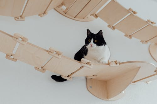 A Piebald Cat on a Wood Bridge