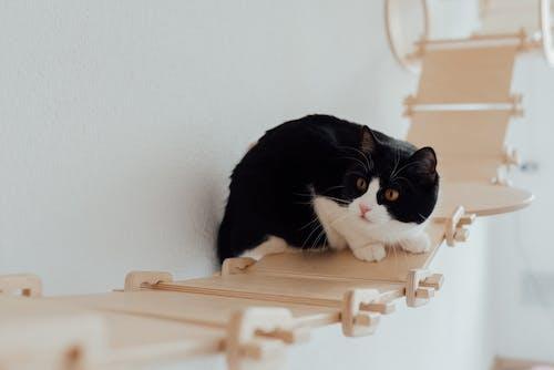 A Tuxedo Cat on a Hanging Wooden Bridge