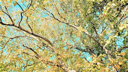 天空, 树木, 阳光 的 免费素材图片