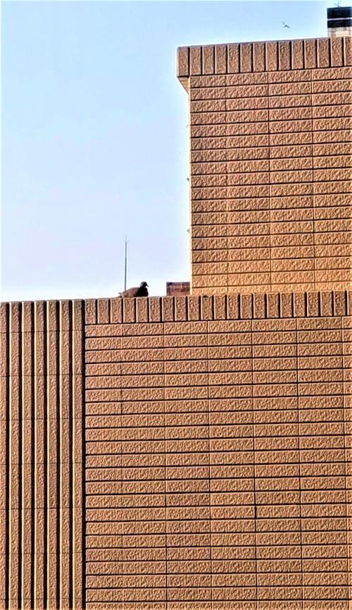 休闲, 天台, 建筑 的 免费素材图片