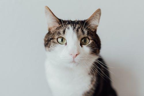 Clos-up Photography of a Pet Cat