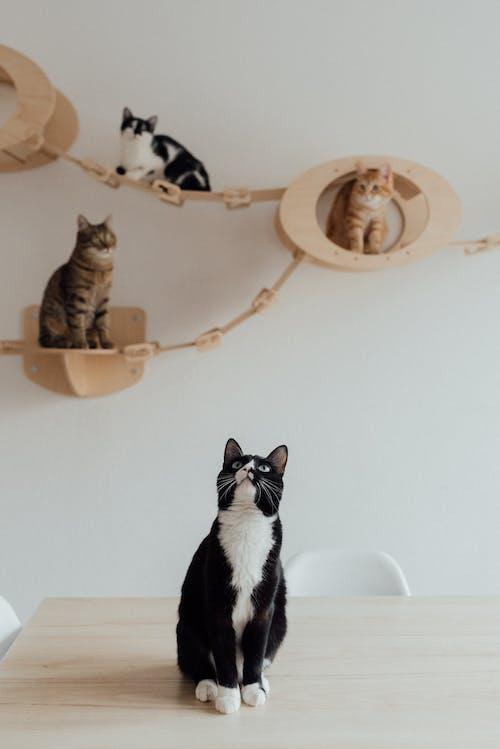 Black and White Cat on White Ceramic Sink