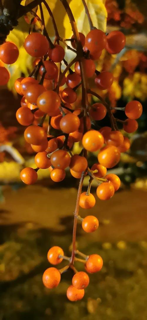 Foto stok gratis buah-buahan, fotografi seluler, kamera ponsel