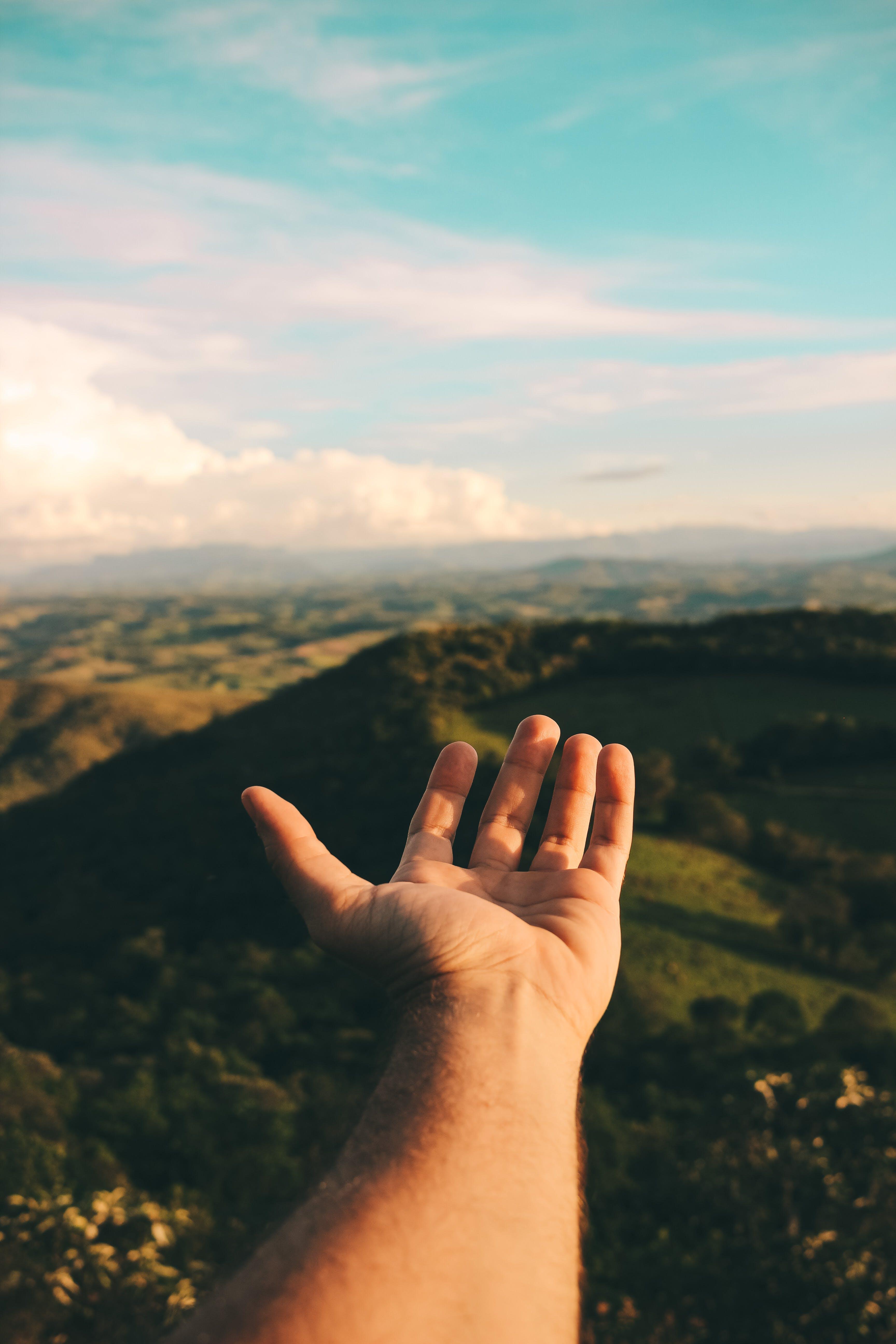 Foto d'estoc gratuïta de arbres, cel, llum del dia, mà