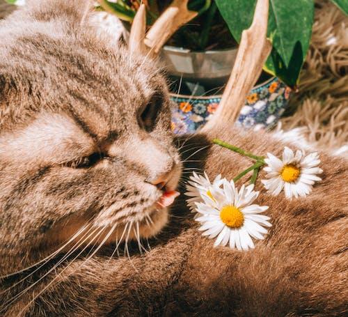 Δωρεάν στοκ φωτογραφιών με αστείος, Γάτα, γατάκι