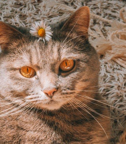 Δωρεάν στοκ φωτογραφιών με απαλός, αστείος, Γάτα