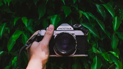Kostnadsfri bild av blad, blixt, digitalkamera