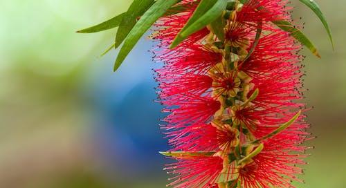 Free stock photo of beautiful flowers, close-up, closeup