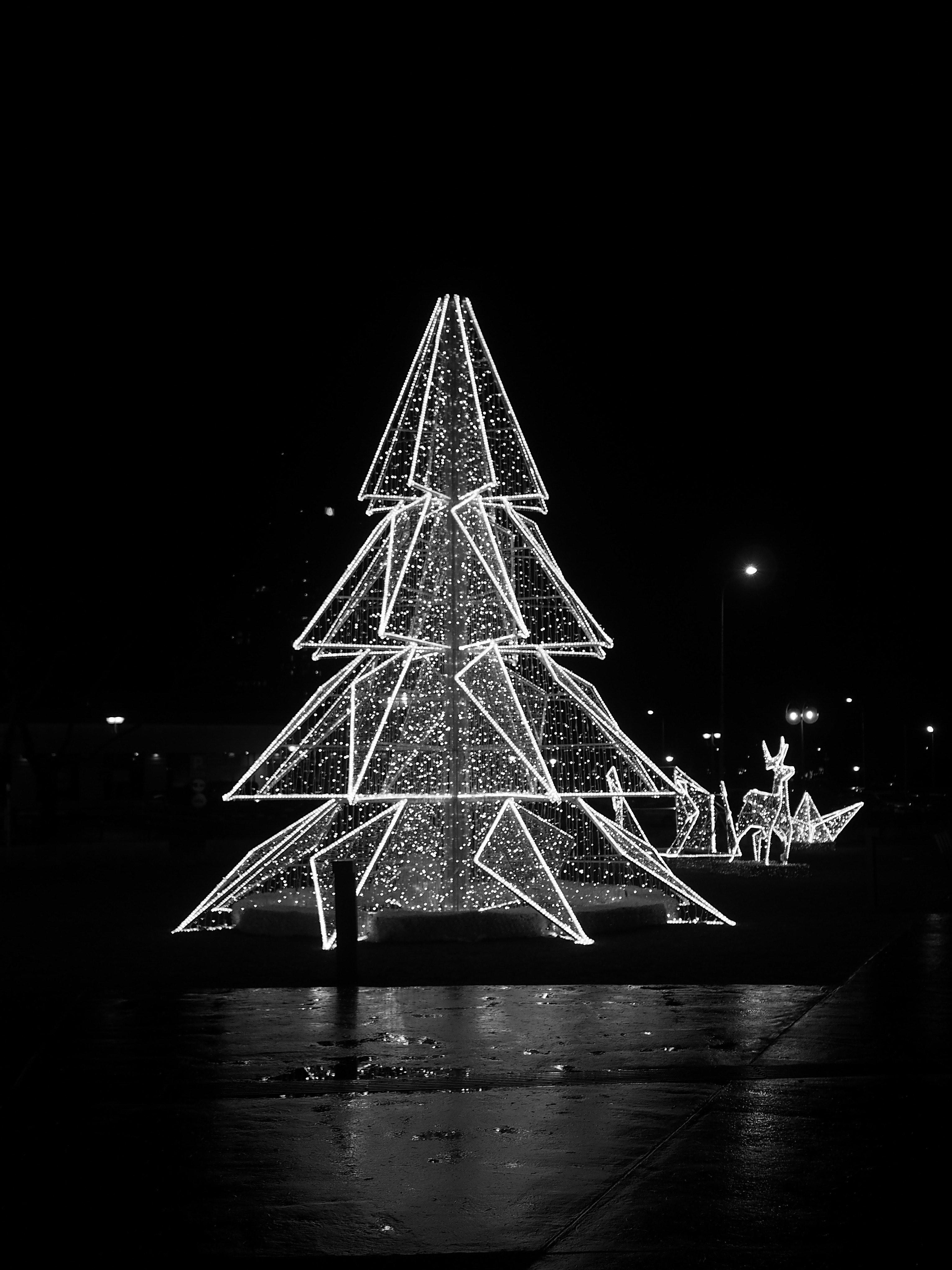 Free stock photo of black and white christmas tree theme christmas