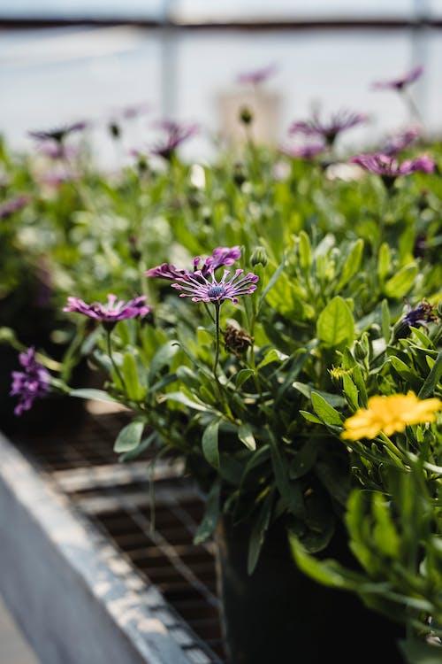 味道, 園藝, 垂直 的 免費圖庫相片