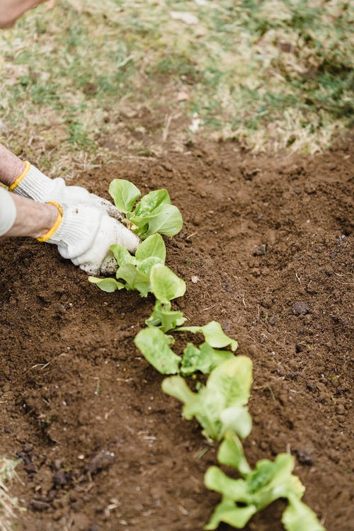Immagine gratuita di agricoltura, ambiente, anonimo